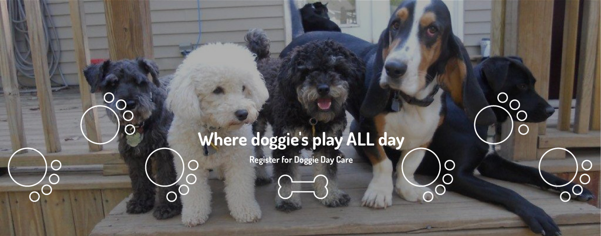 where-doggies-play-all-day_03